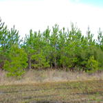 25 Acres of Undeveloped Land Offers Many Possibilities thumbnail image