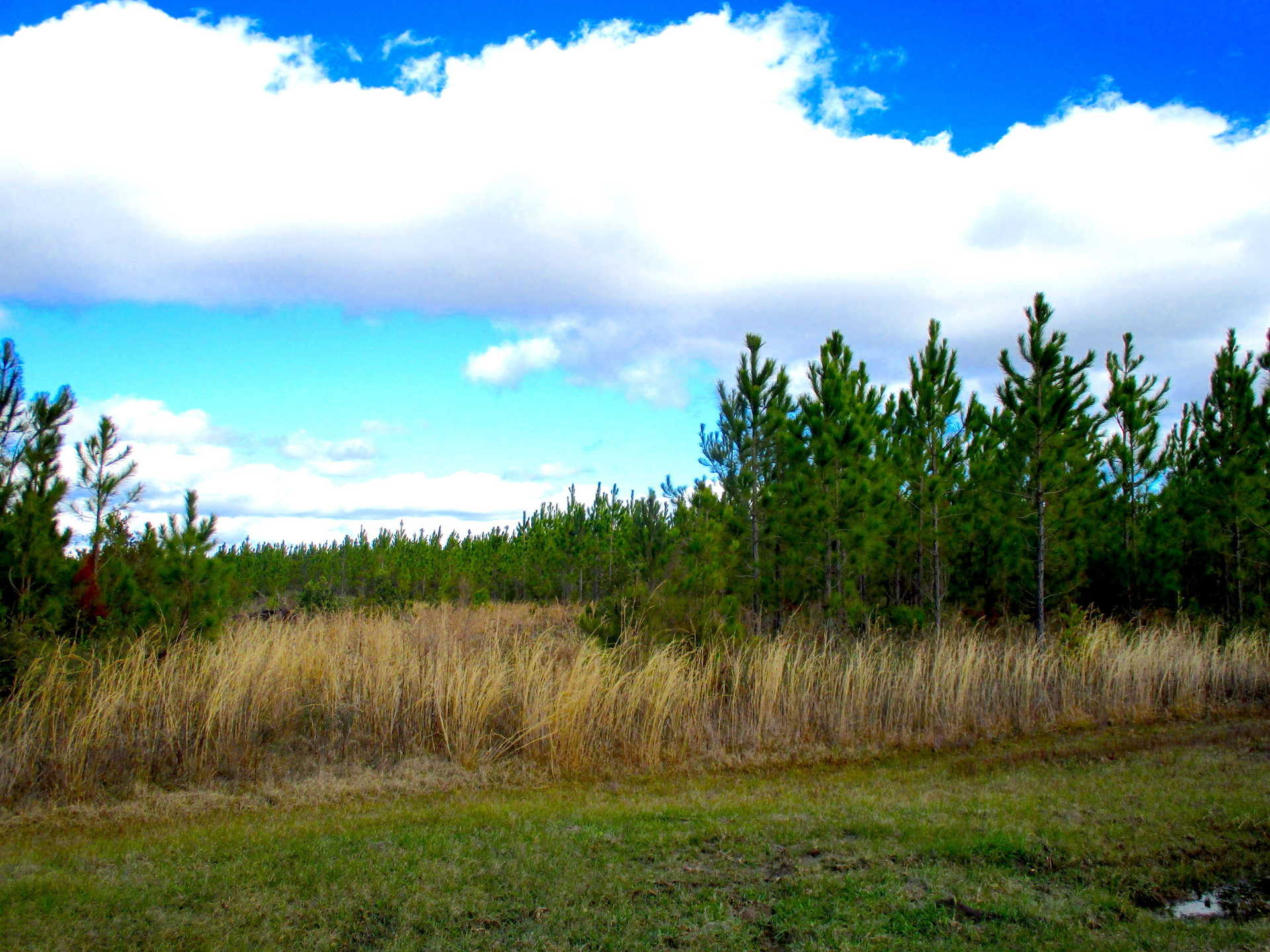 Timber. Wildlife. Possibilities on Perch Creek Trail image