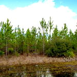 Timber. Wildlife. Possibilities on Perch Creek Trail thumbnail image