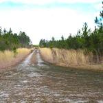 Abundant Timber, Abundant Wildlife, Abundant Possibilities! thumbnail image