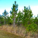 Abundant Timber, Abundant Wildlife, Abundant Possibilities! thumbnail image