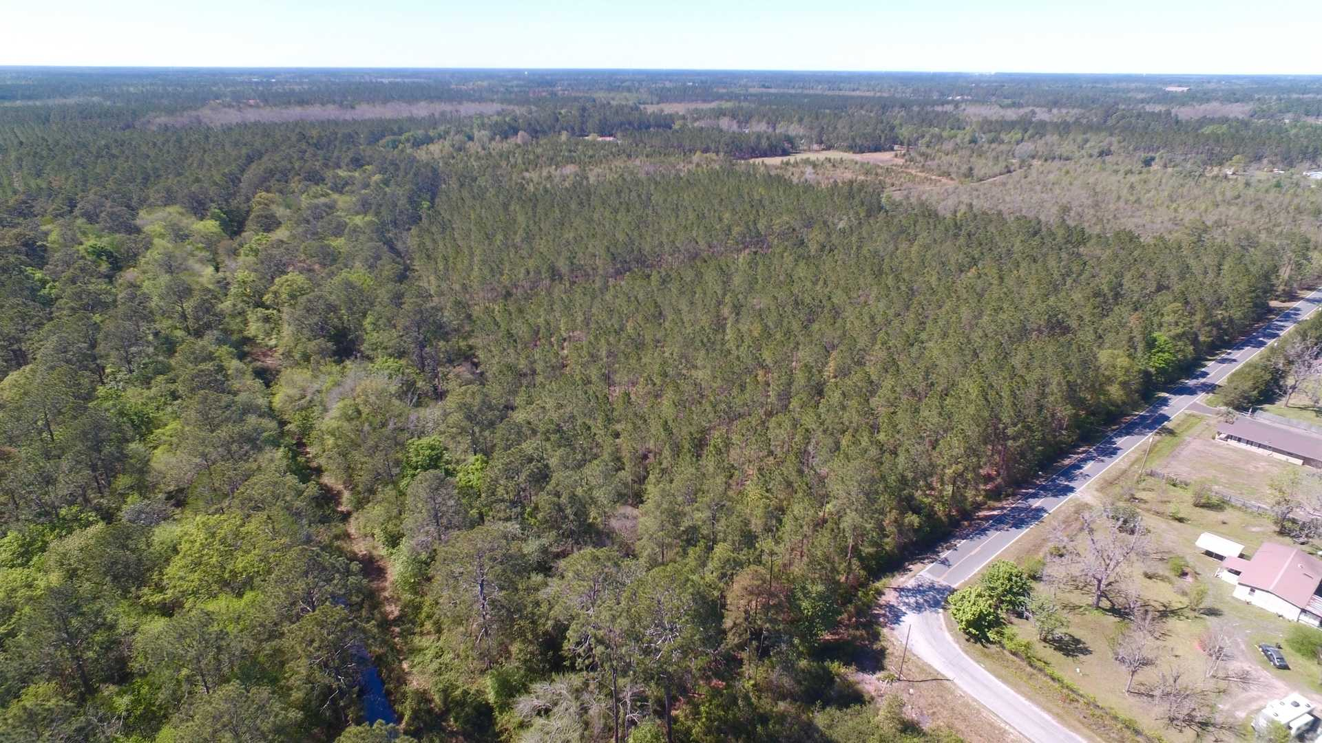 33 Acre Timber Tract in Ware County image