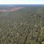 33 Acres Waycross, GA  thumbnail image