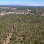 33 Acre Timber Tract in Ware County thumbnail image