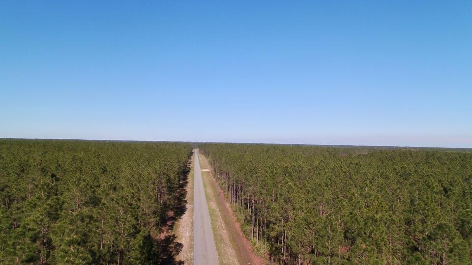 480 Acre Timberland Plantation main image