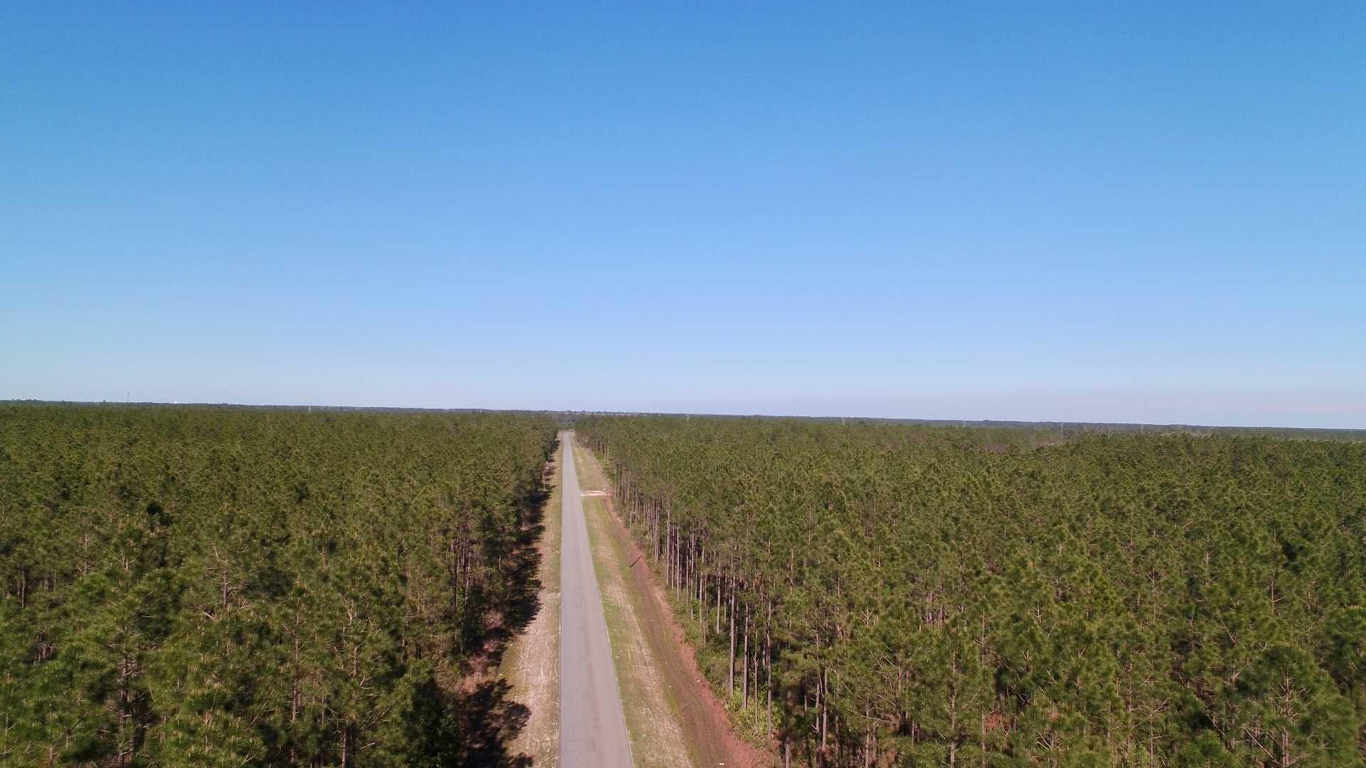 480 Acre Timberland Plantation image