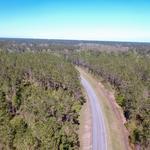 480 Acre Timberland Plantation thumbnail image