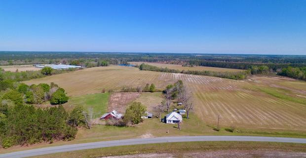 Plantation Farm Offers Pastureland and Cultivation image