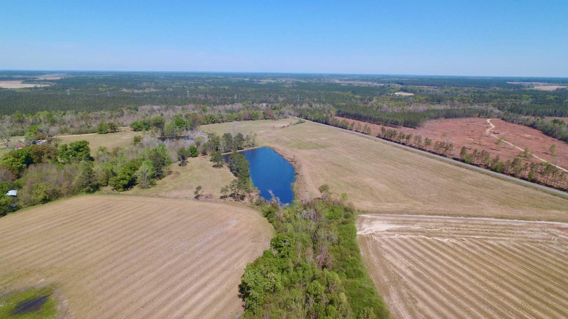 Aged Farm Plantation Offers Timber, Pastureland and Cultivation image