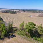 Aged Farm Plantation Offers Timber, Pastureland and Cultivation thumbnail image