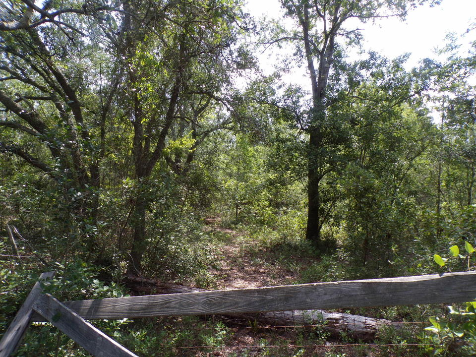 Tract 2A 11.464 Acres in Manningtown Community main image