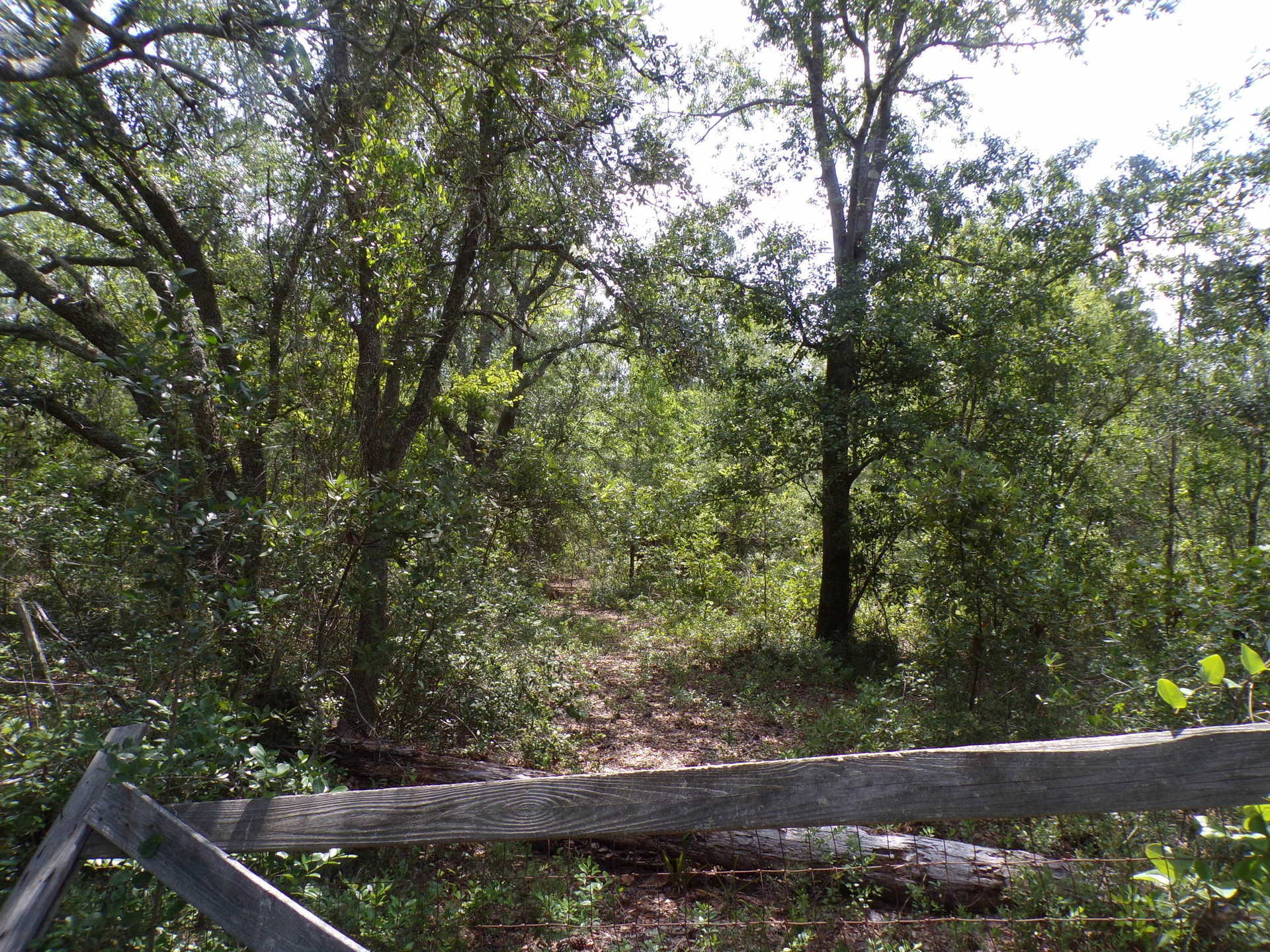 11+ Acres in Manningtown Community image