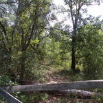 Tract 2A 11.464 Acres in Manningtown Community thumbnail image