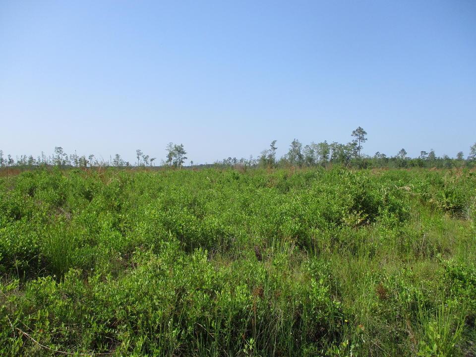 Planted Pine Tract in Nicholls, GA main image