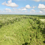 42 Acres with Pond Site thumbnail image