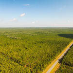 Recreational Investment Tract in Charlton County thumbnail image
