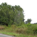 Homesite, Getaway, Invest in 21+ Acres on Alma Hwy thumbnail image