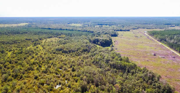 Large Acreage Tract Ideal for Hunting, Investment image
