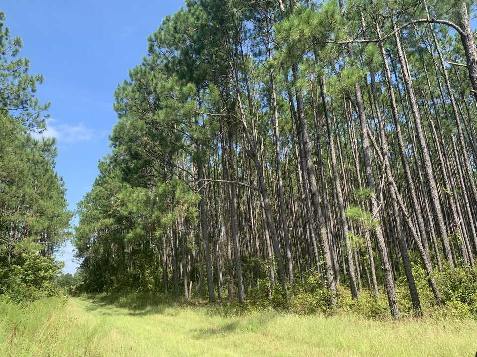Homesite, Getaway, Invest in 21+ Acres on Alma Hwy main image