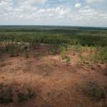 17 Acres Near Hinesville, GA thumbnail image