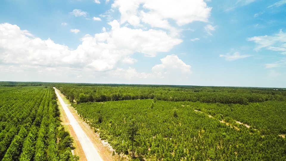 Pine Plantation at Shellman Bluff main image