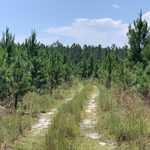 Coastal Pine and Hardwood Plantation  thumbnail image