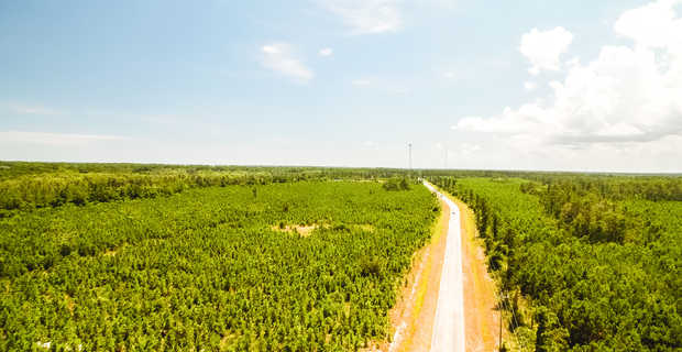 Coastal Pine and Hardwood Plantation  image