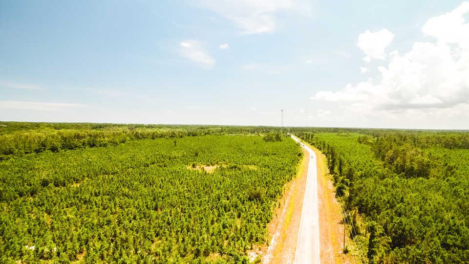 50 acre Coastal Pine and Hardwood Plantation  main image
