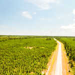 50 acre Coastal Pine and Hardwood Plantation  image