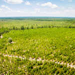 Hardwood and Pine Plantation in Long County thumbnail image