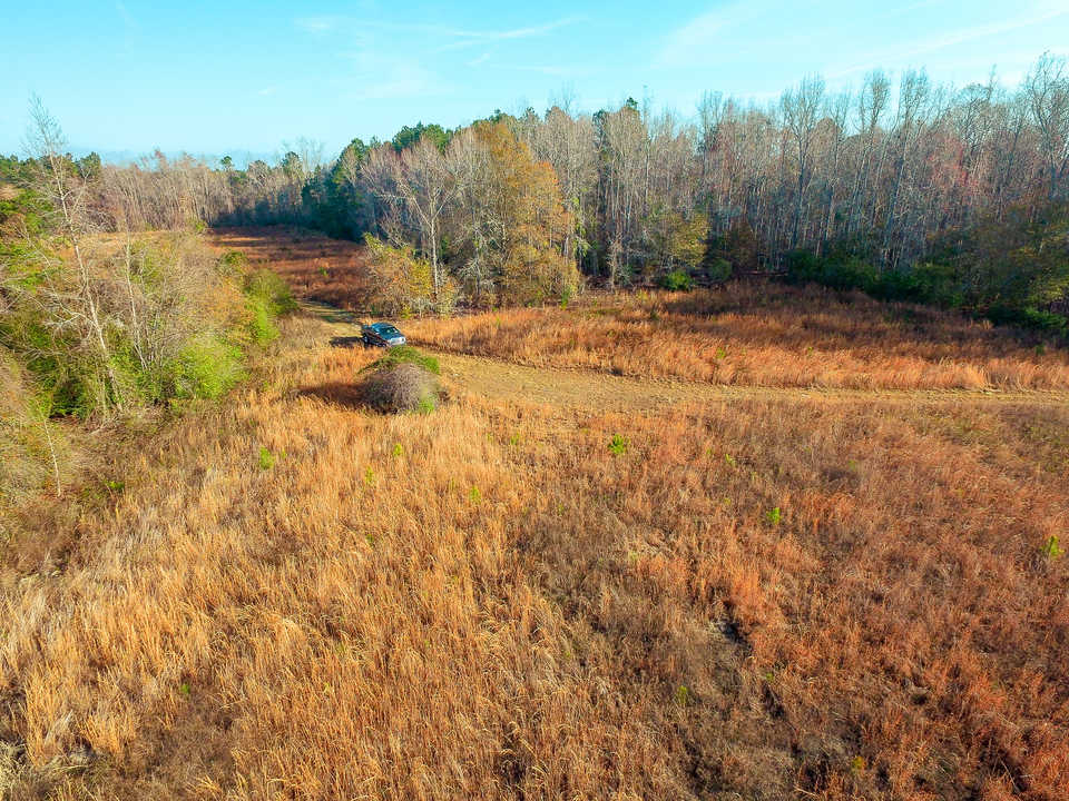 Private, Peaceful Homesite in Long County main image