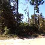 Beautiful Lot in Penholloway Community thumbnail image