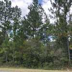 S Forest Dr - 3 acre tract thumbnail image