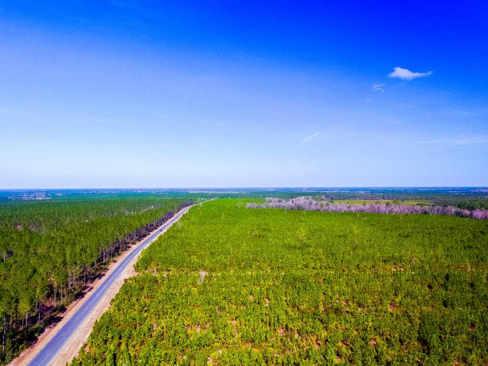 146 Acre Pine Plantation main image