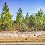 146 Acre Pine Plantation thumbnail image