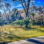 Homesite on Hoke Circle thumbnail image