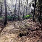 Beautiful Acreage on Iconic Goose Creek thumbnail image