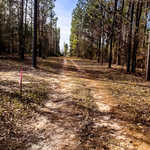 Beautiful Acreage on Iconic Goose Creek thumbnail image