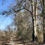 141+/- Wilcox County Recreational & Investment Property thumbnail image