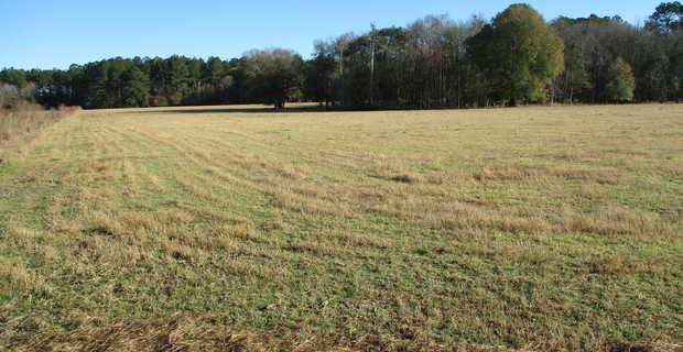 29 Acres Turner Road Ware County, GA image