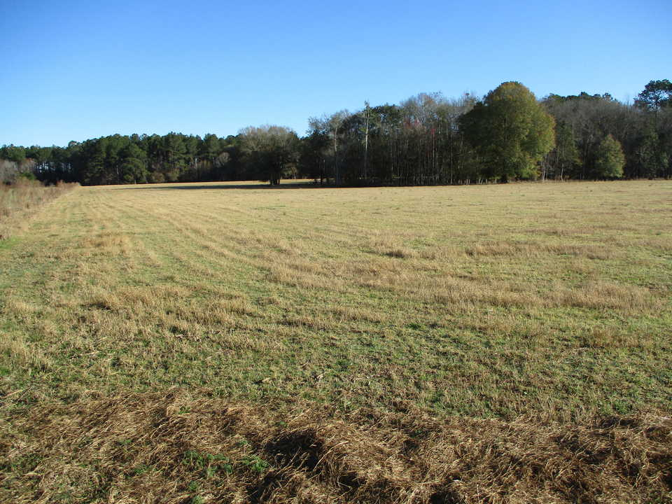 29 Acres Turner Road Ware County, GA main image