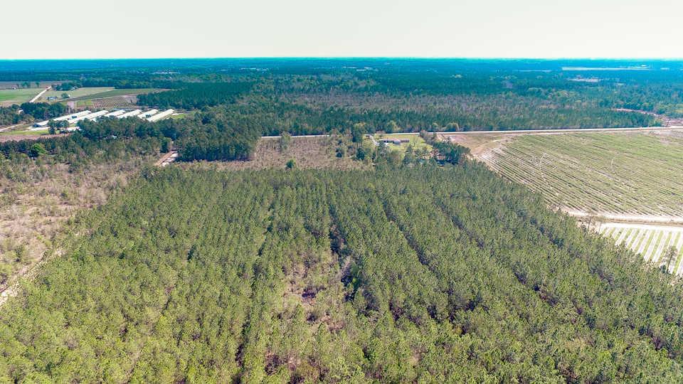 46 Acre Timberland Tract in Alma, GA main image