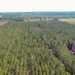 46 Acre Timberland Tract in Alma, GA thumbnail image