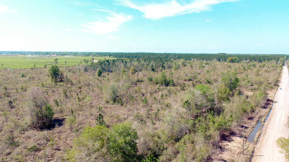 49 acre Bacon County Investment Tract main image