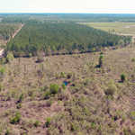 49 acre Bacon County Investment Tract thumbnail image
