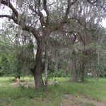 Homesite on Birchwood Rd thumbnail image