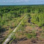 90+ Acre Savannah Plantation Tract thumbnail image