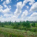 Priced Right Recreational Tract in Waycross, GA thumbnail image