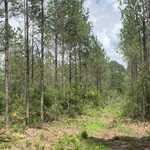 96.3 Acres on Briar Patch Ln and Carswell Ave thumbnail image