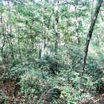 Goose Creek Lot 17 thumbnail image